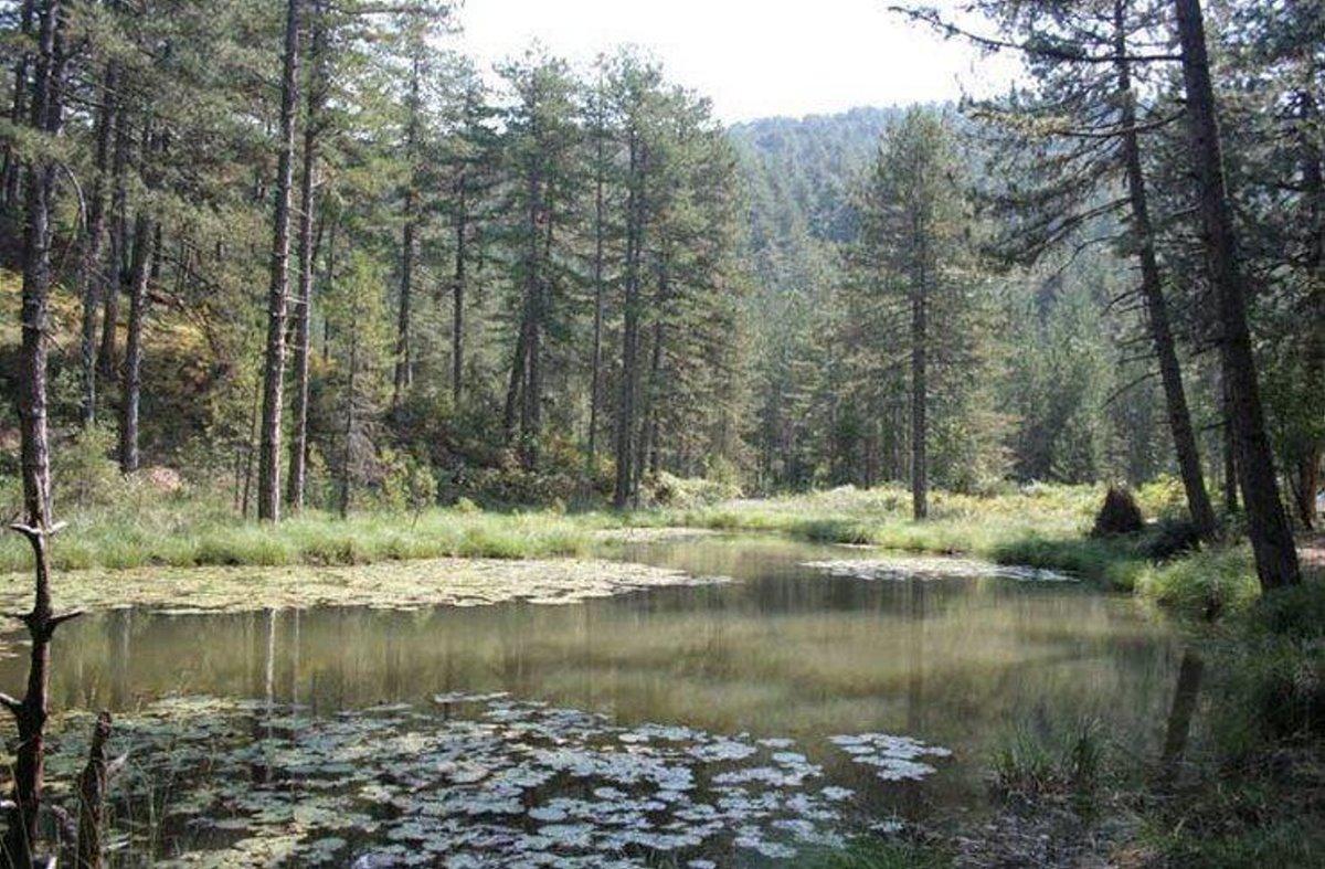 η λίμνη Ζορίκα στο Ζαγόρι αγκαλιάζεται από ένα καταπράσινο δάσος