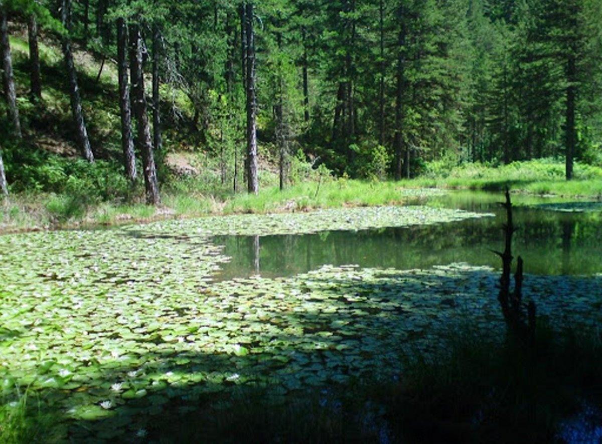 καταπράσινο σκηνικό στη λίμνη Ζορίκα στο Ζαγόρι