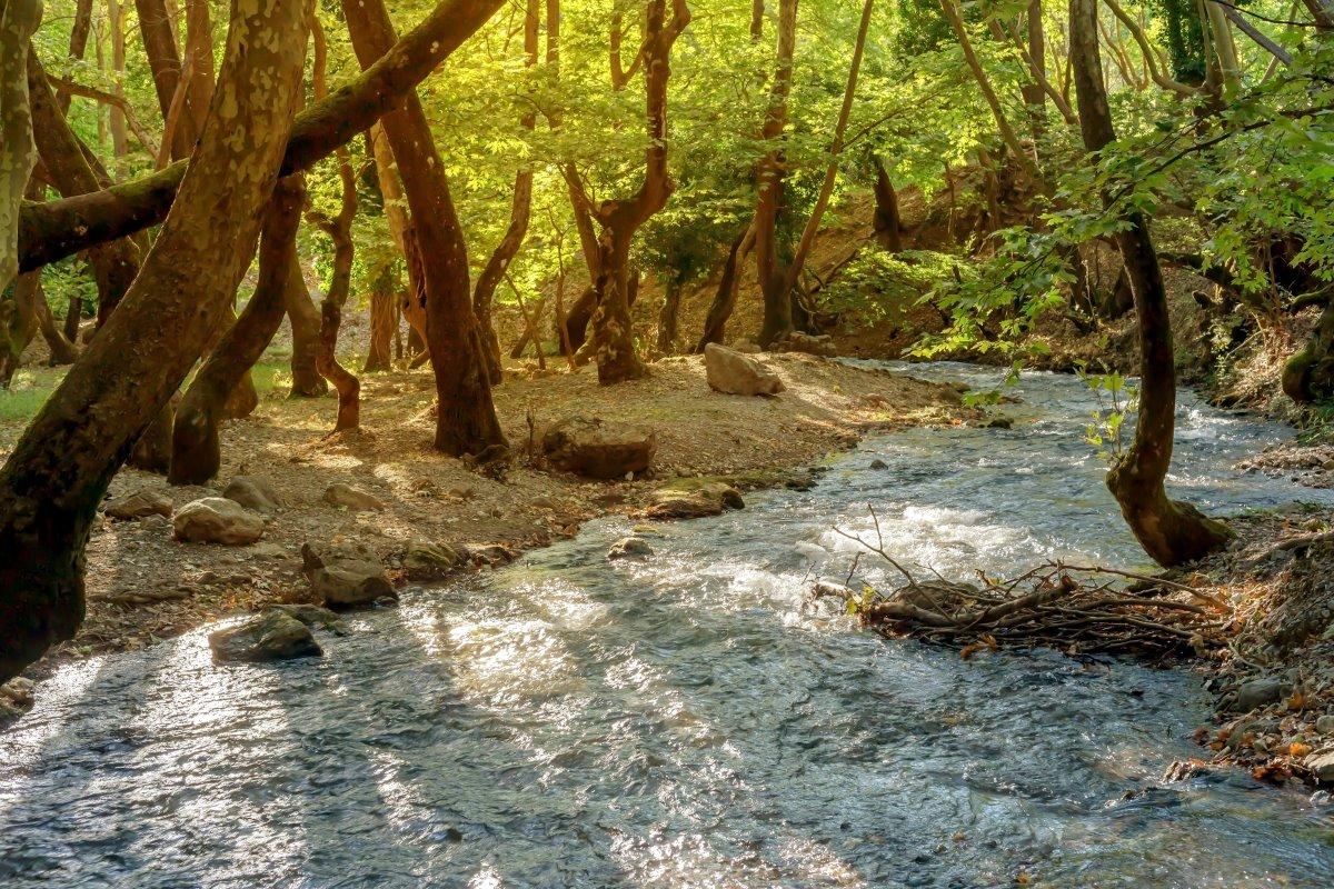 Το ποτάμι στο δάσος Πλανητέρο, Πελοπόννησος