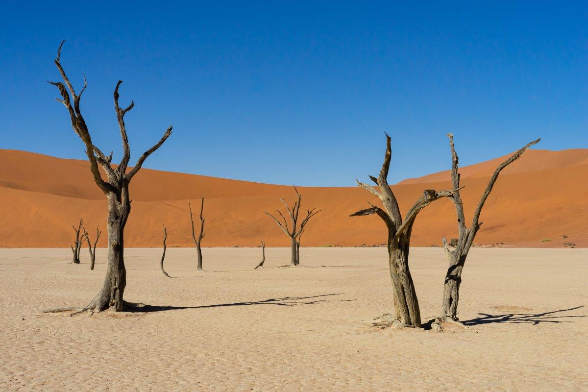Αμμόλοφοι Ερήμου Namib, Ναμίμπια
