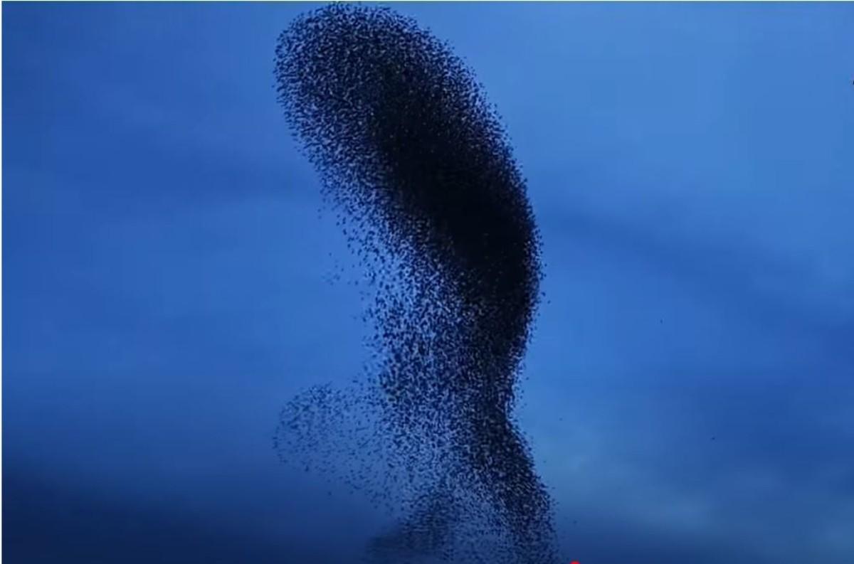 """Ψαρόνια """"χορεύουν"""" στον ουρανό του Ναυπλίου"""