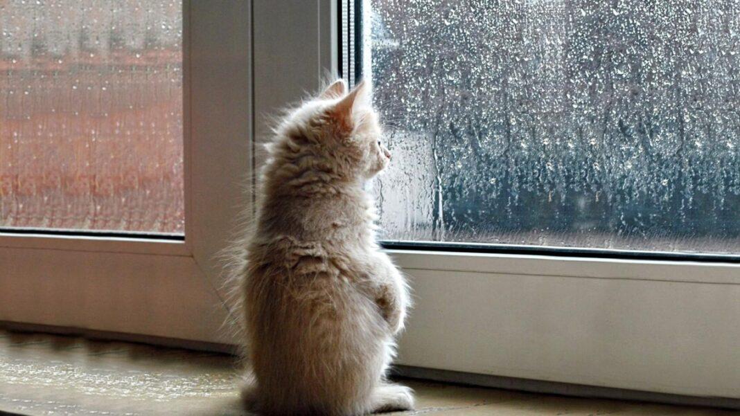 καιρός 30/12/2020 πρόγνωση ζέστη και βροχές