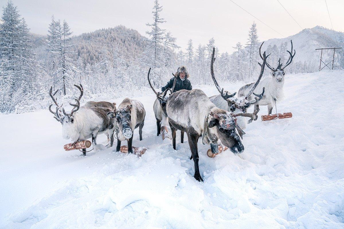Χριστούγεννα 2021 στο Yakutsk μετακίνηση με ταράνδους