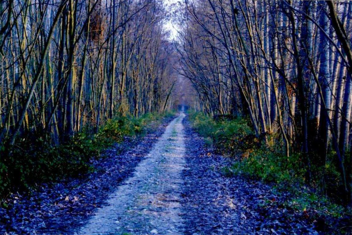 Το Δάσος Κοτζά Ορμάν Ξάνθη το βράδυ