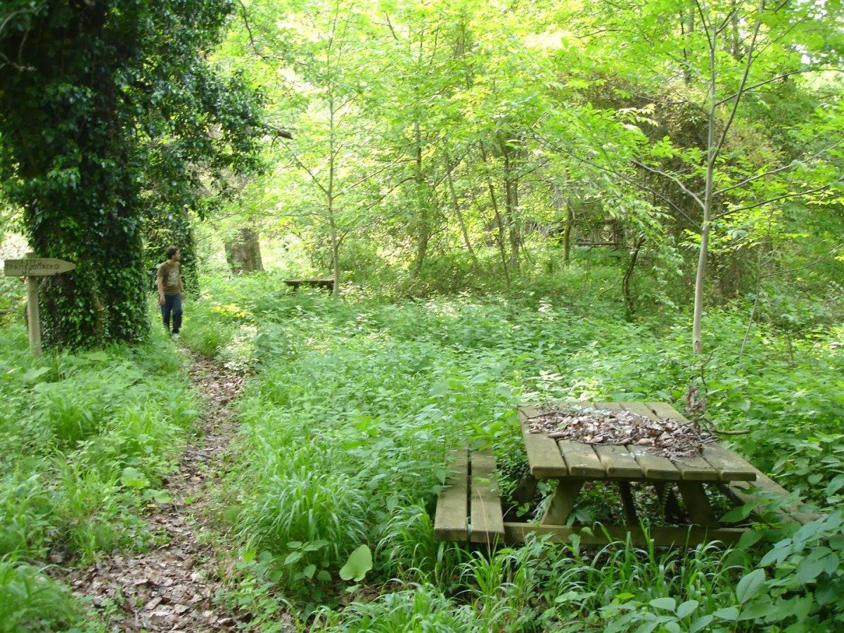 Δάσος Κοτζά Ορμάν ζούγκλα Ευρώπης