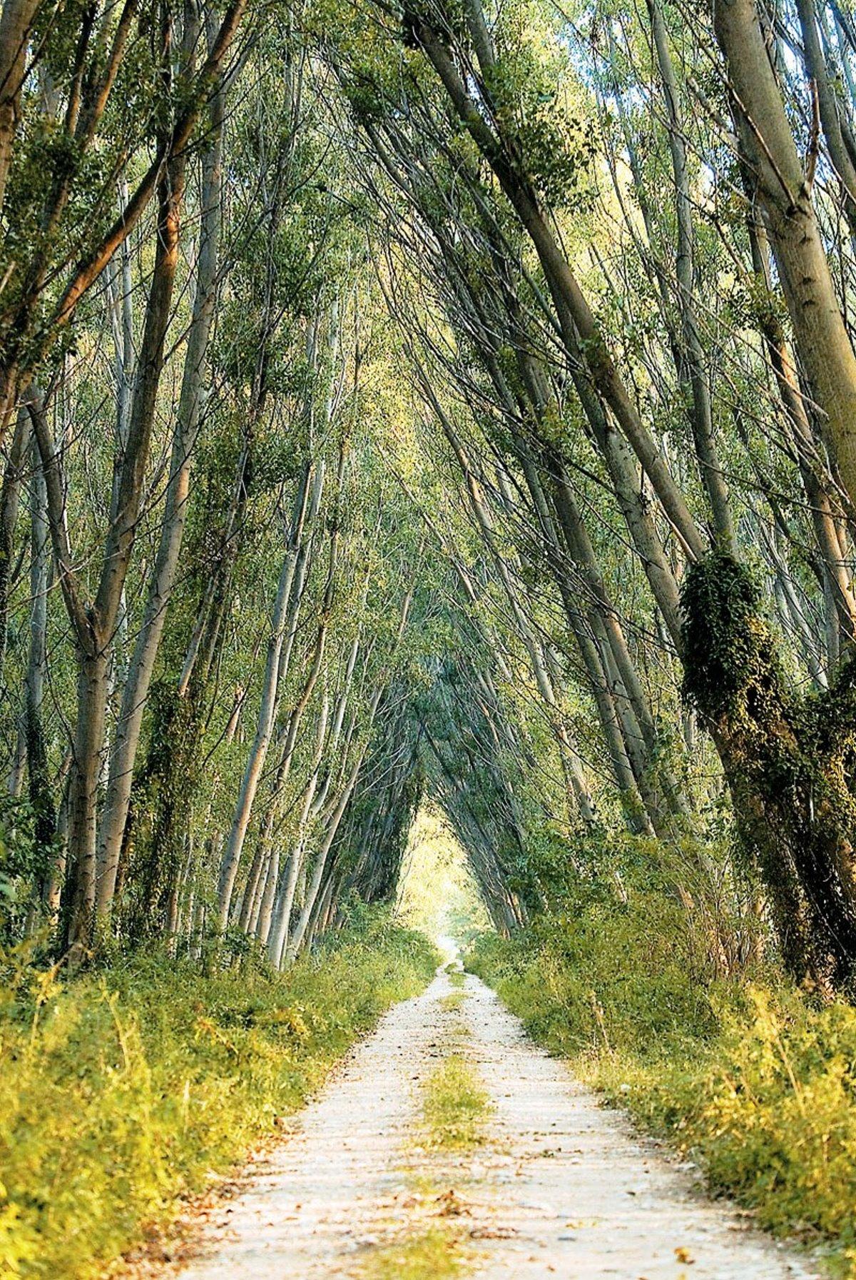 Δάσος Κοτζά Ορμάν Ξάνθη πλούσια πανίδα και χλωρίδα
