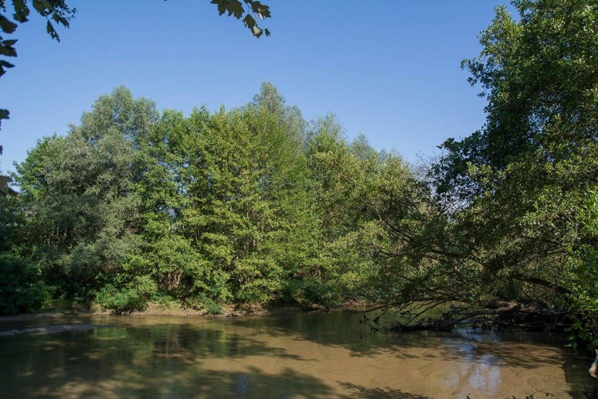 Δάσος Κοτζά Ορμάν Ξάνθη παραποτάμιο Νέστου