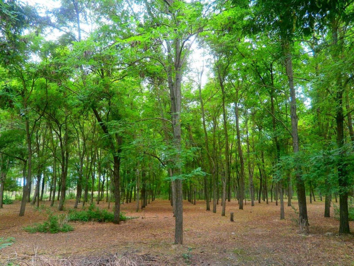 Δέντρα στο Δάσος Κοτζά Ορμάν Ξάνθη