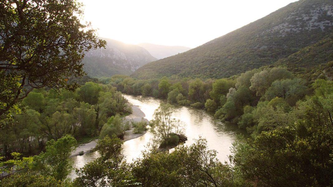 Κοτζά Ορμάν Δάσος Νέστος