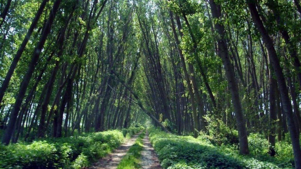 Δάσος Κοτζά Ορμάν Ξάνθη