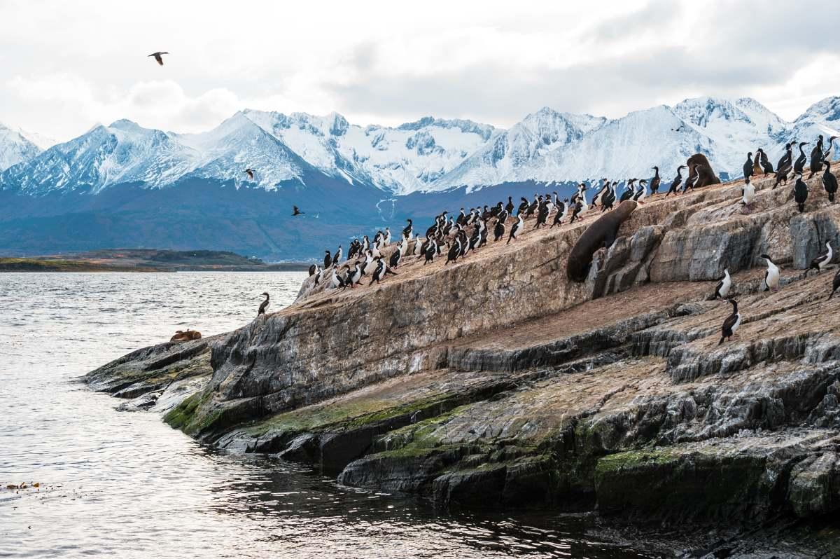 Η αποικία του θαλάσσιου λιονταριού και του βασιλιά Κορμοράνου  σε ένα νησί στο κανάλι Beagle. Tierra del Fuego, Αργεντινή - Χιλή