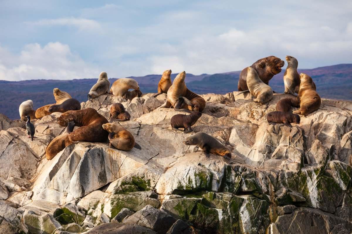 Seal Island στο κανάλι Beagle κοντά στην πόλη Ushuaia. Η Ushuaia είναι η πρωτεύουσα της Tierra del Fuego στην Αργεντινή.