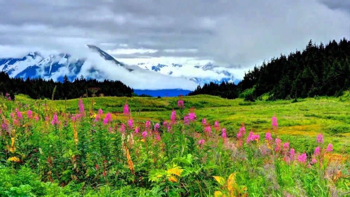 καλοκαίρι στην Αλάσκα και όχι μόνο χιόνια