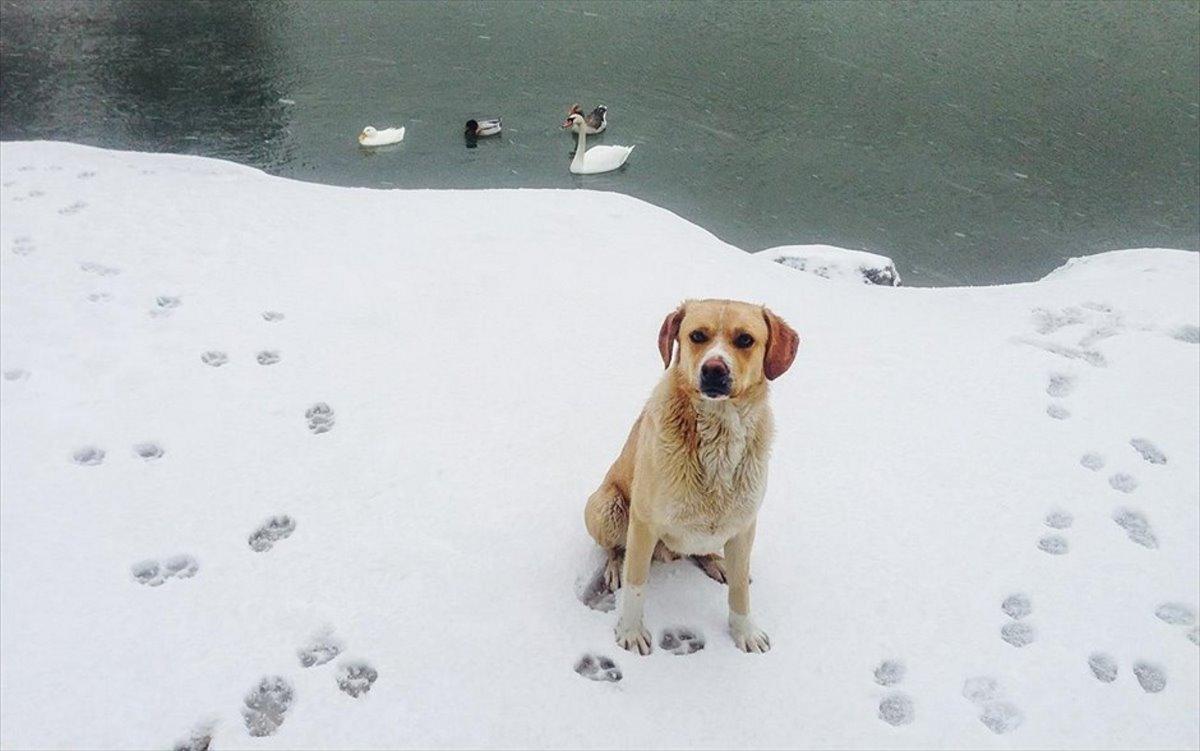 απόκοσμο τοπίο στη χιονισμένη λίμνη Μπελέτσι