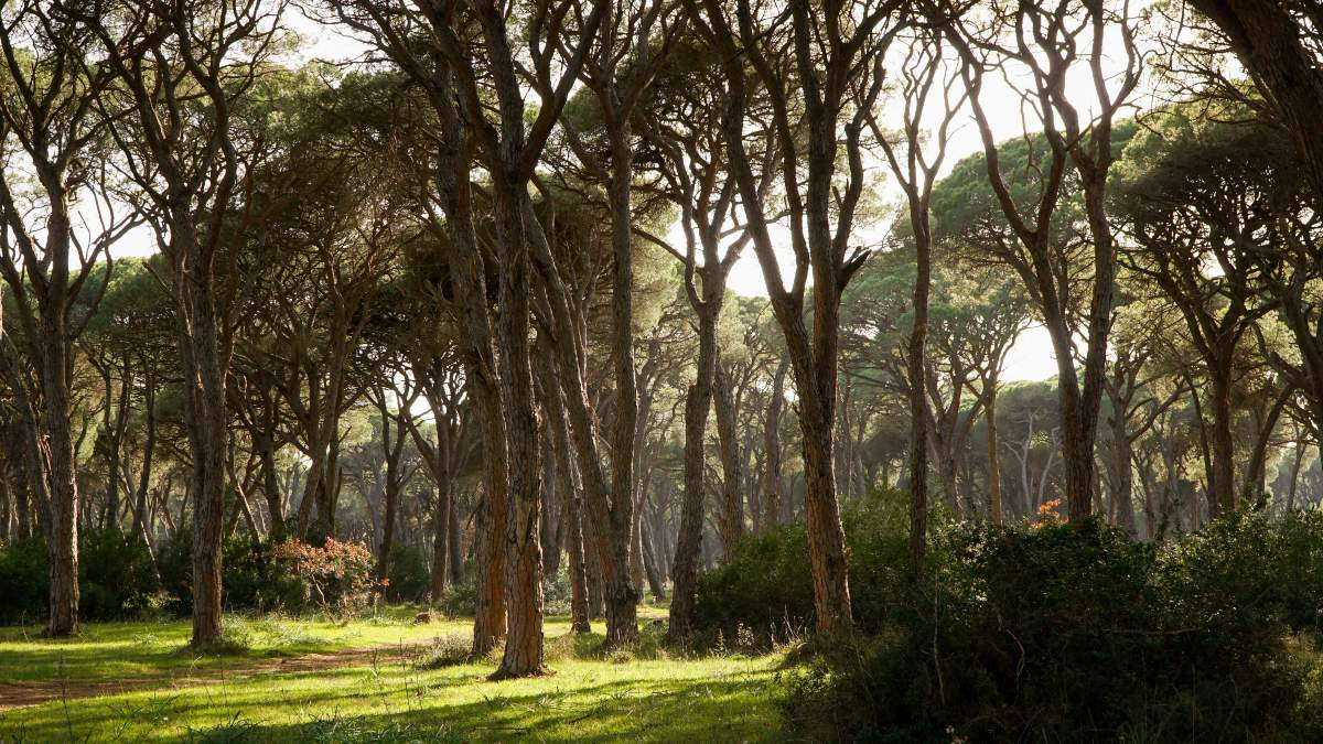 το δάσος της Στροφιλιάς