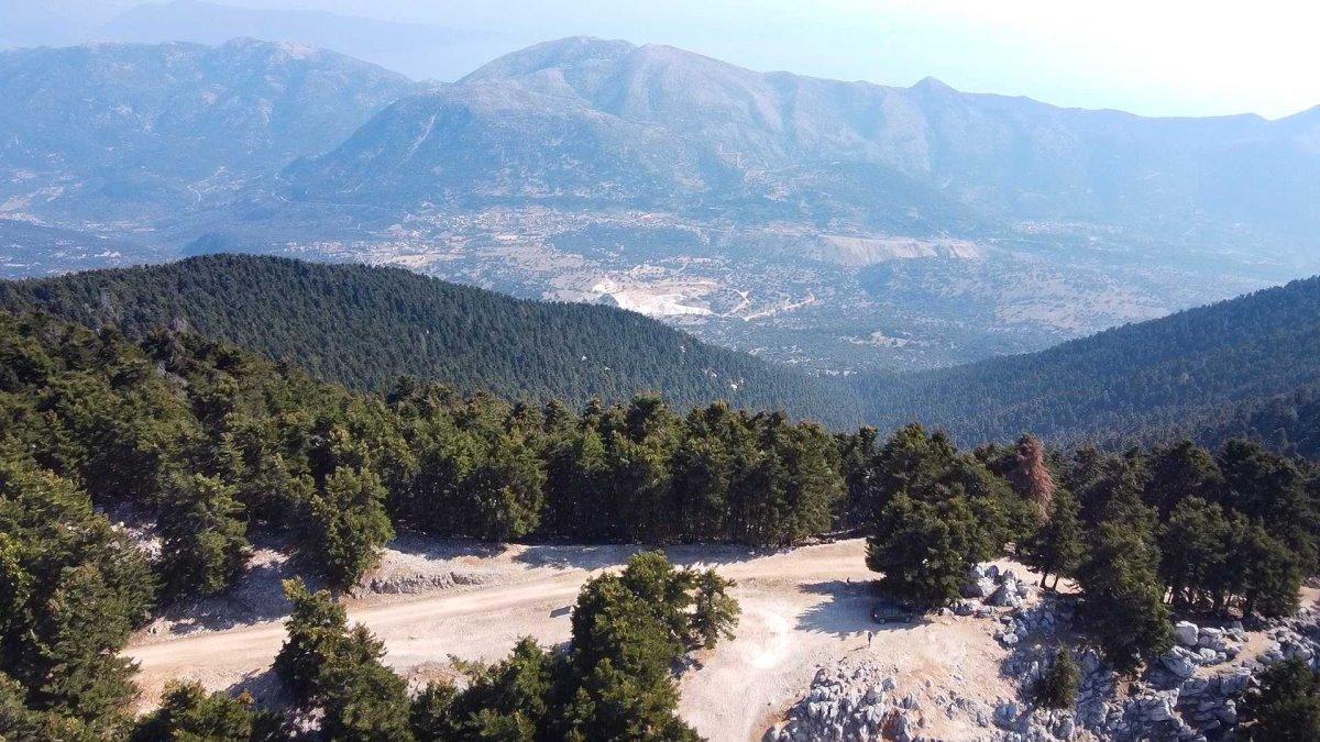 άγνωστο δάσος Ελλάδας σπάνιο έλατο