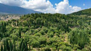 Το άγνωστο δάσος της Ελλάδας που έχει ένα έλατο μοναδικό στον κόσμο – Ένα σπάνιο φυσικό τοπίο σε νησί!