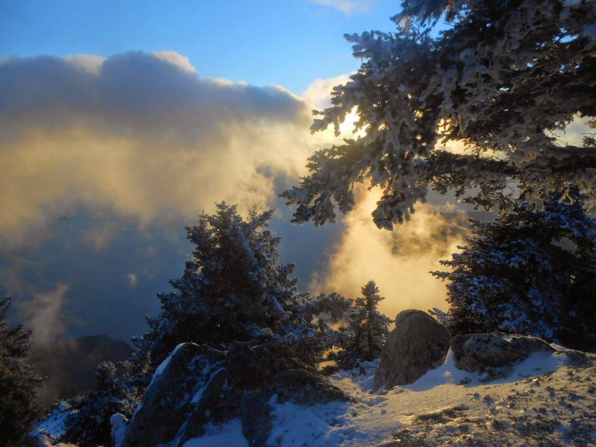 Χιονισμένο έλατο Κεφαλονιά Αίνος