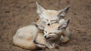 Δείτε 15 από τα πιο περίεργα & άγνωστα ζώα του πλανήτη που φαίνονται σαν photoshop!