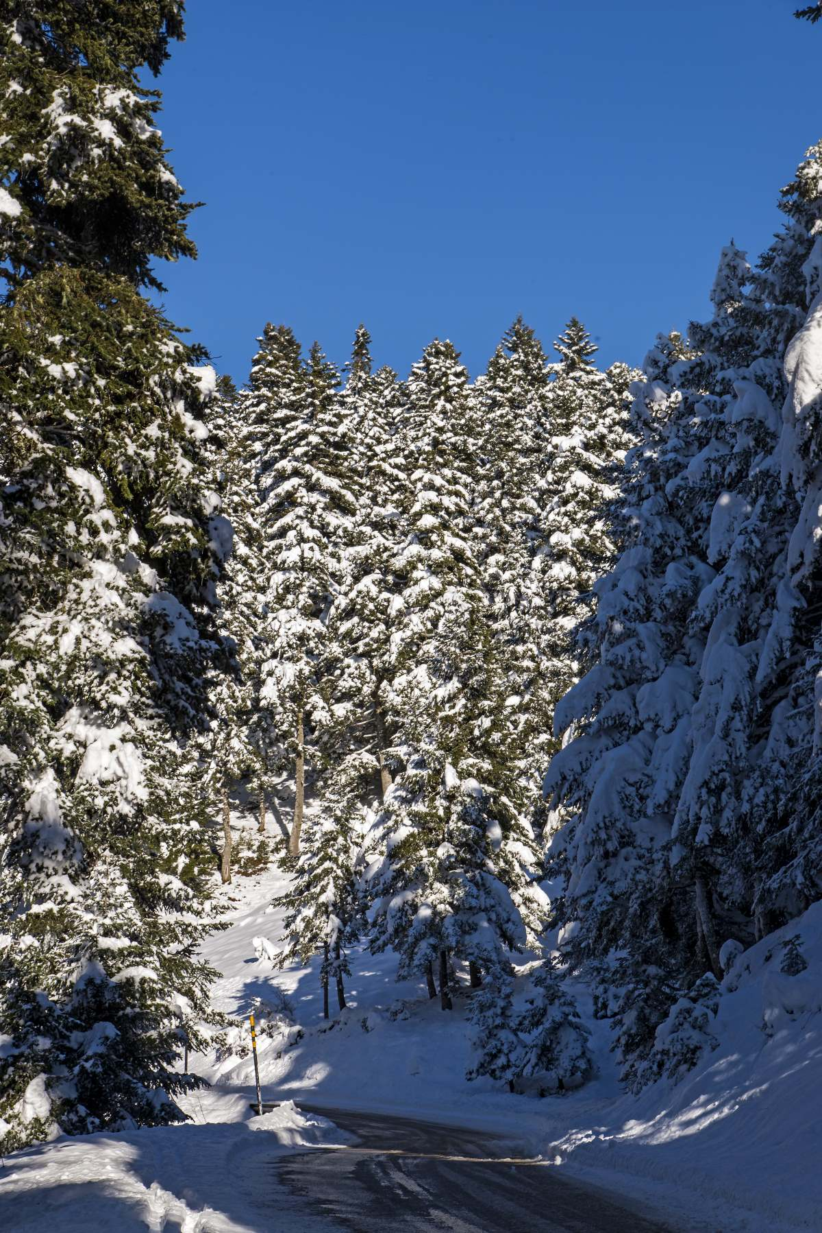 Η χιονισμένη δοαδρομή Καρπενήσι - Κρίκελλο