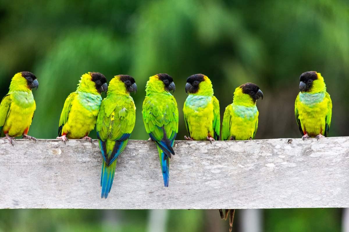 Υγρότοποι Pantanal, πουλιά