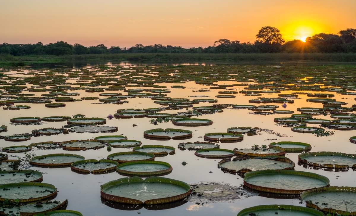 Υγρότοποι Pantanal