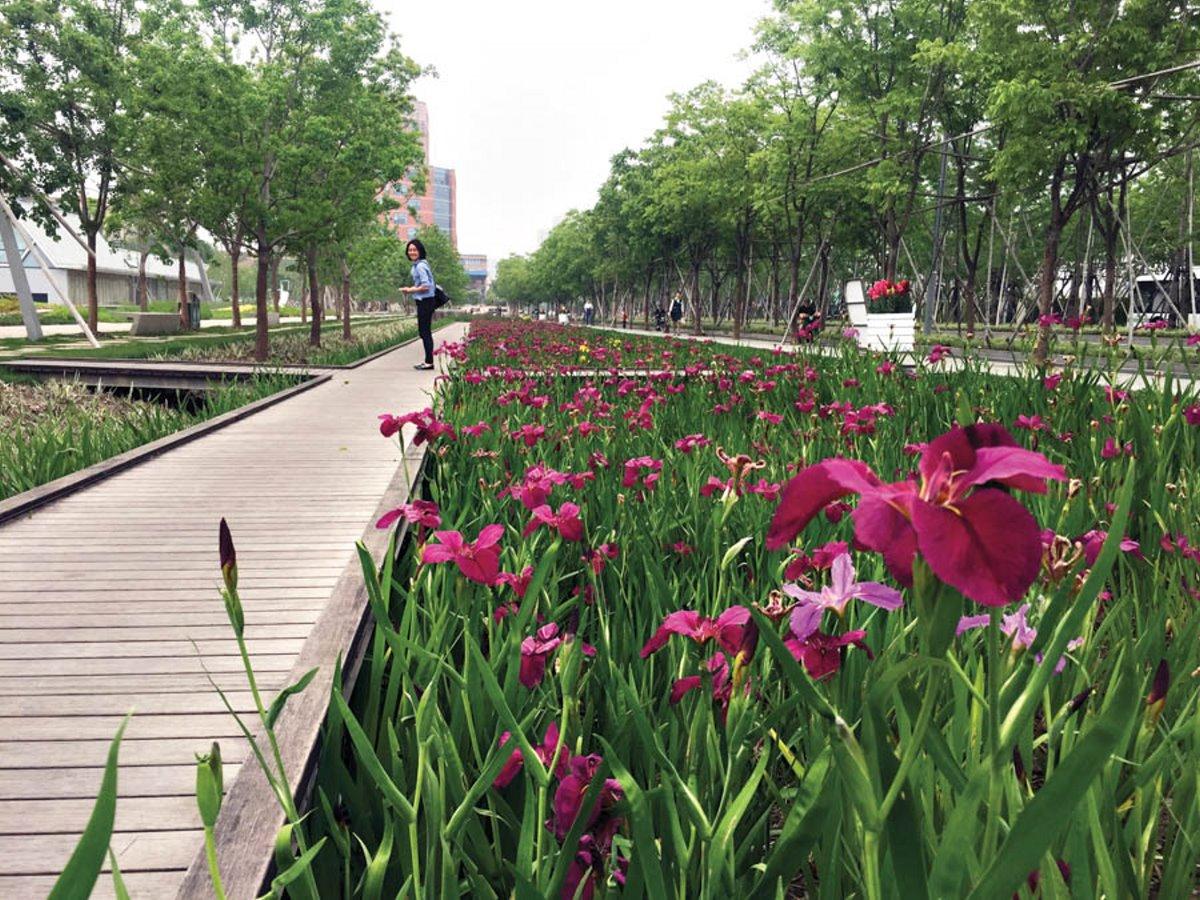 Λουλούδια στο πάρκο της Σαγκάης