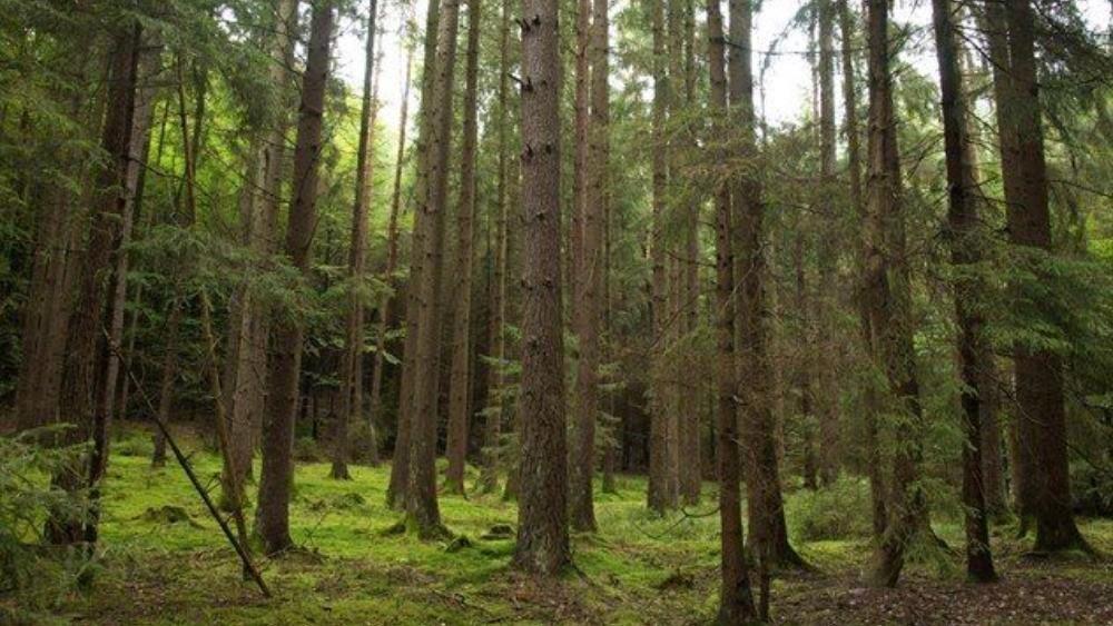 Το δάσος της Σκιρίτιδας