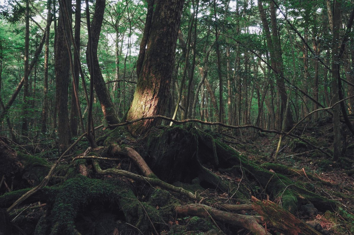 Aokigahara, Ιαπωνία