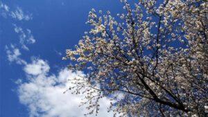 Καιρός 14/04: Αρκετή ηλιοφάνεια και λίγες τοπικές νεφώσεις – Στα ίδια επίπεδα η θερμοκρασία
