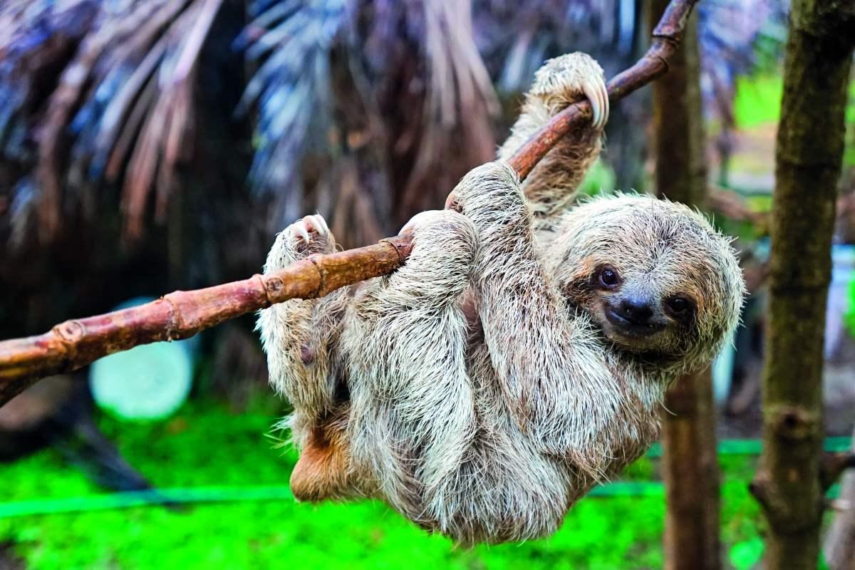 Άγρια ζωή παντού στην Κόστα Ρίκα!