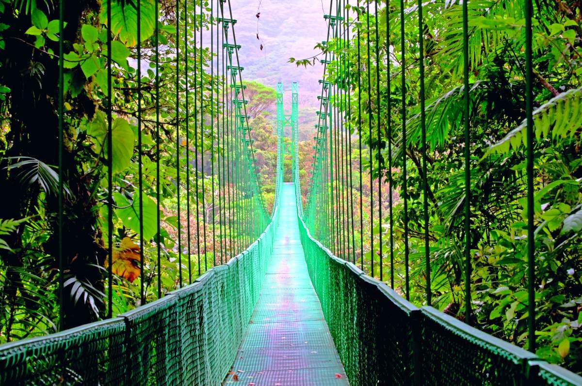 Κρεμαστή γέφυρα Monteverde Cloud forest