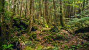 Τα πιο τρομακτικά δάση του πλανήτη θα σας κάνουν σίγουρα να… το βάλετε στα πόδια!