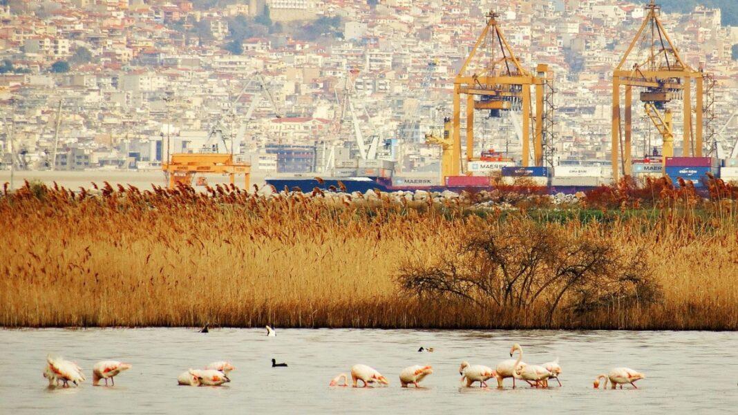 Λιμνοθάλασσα καλοχωρίου Θεσσαλονίκη