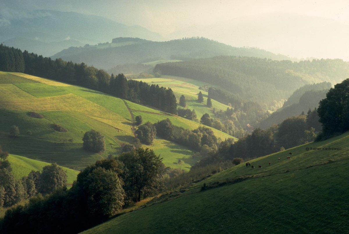 Δάσος Μέλανας Δρυμός Γερμανία