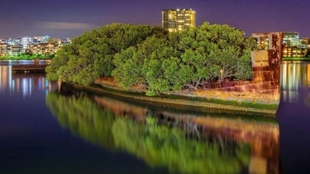 Πλωτό δάσος Σίδνεϊ