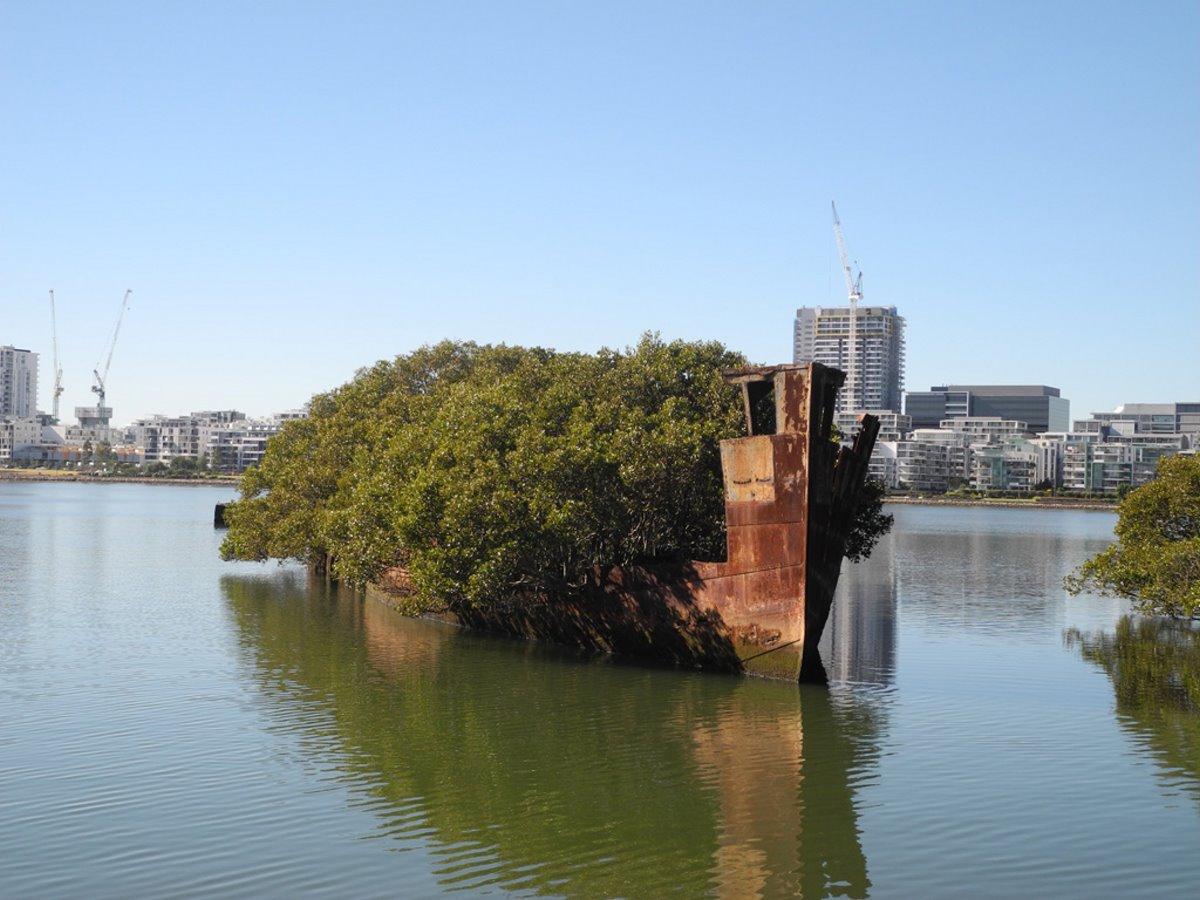 Πλωτό Δάσος στην Αυστραλία