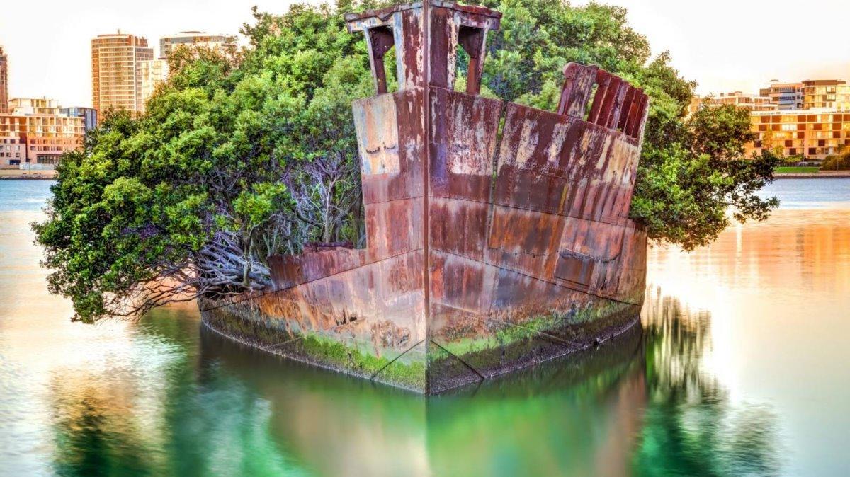 Παλιό πλοίο έγινε δάσος στο Σίδνεϊ