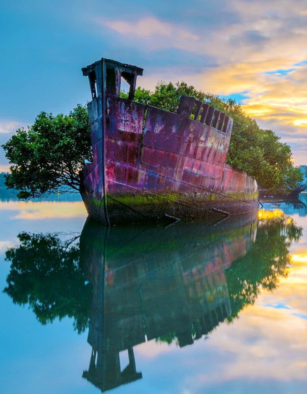 Παλιό πλοίο έγινε πλωτό δάσος στην Αυστραλία