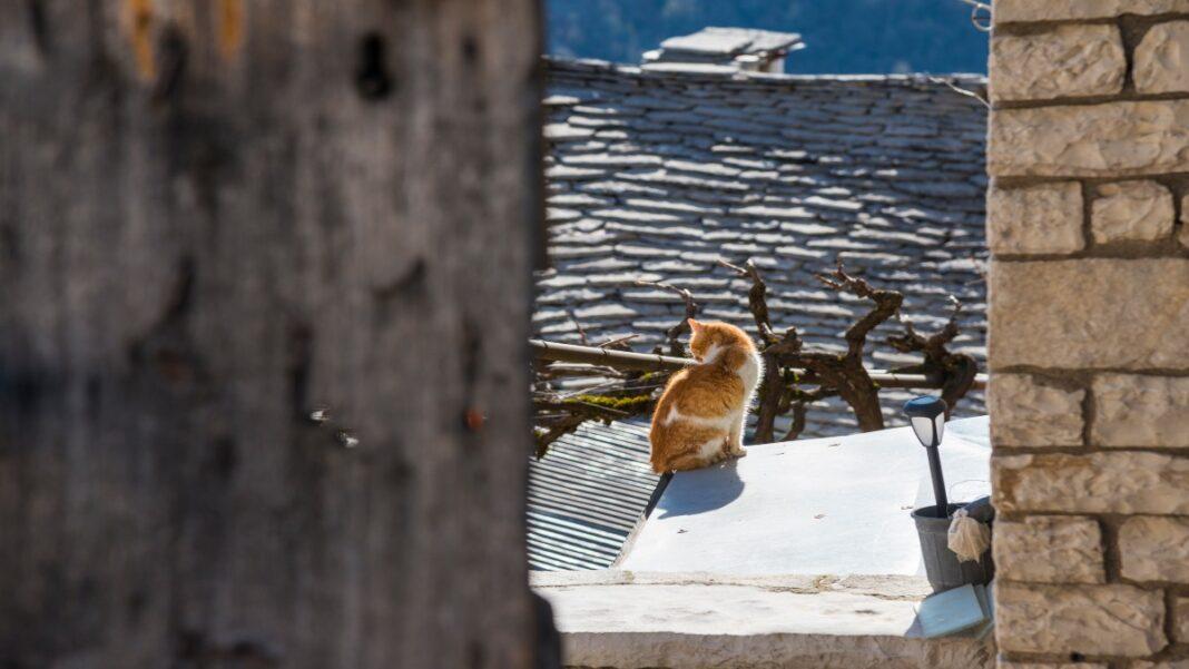 Βίτσα, φωτογραφιοκό ταξίδι στο πέτρινο διαμάντι του Ζαγορίου