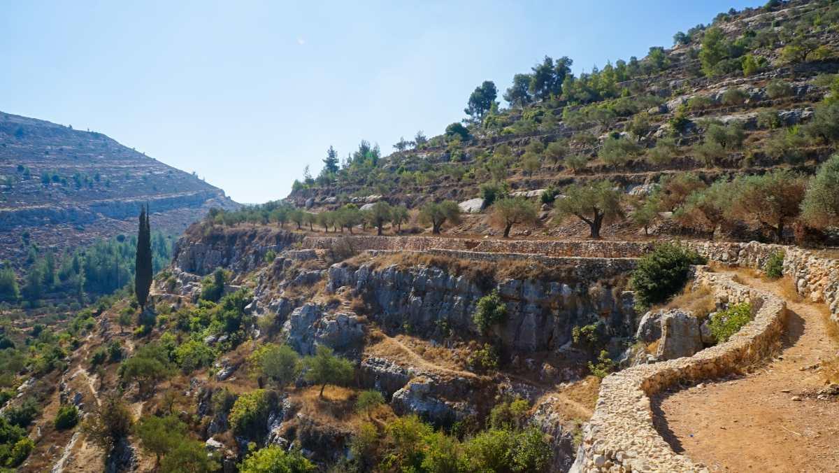 Κτήματα ελιών και σταφυλιών (Land of olives and Vines), Παλαιστίνη