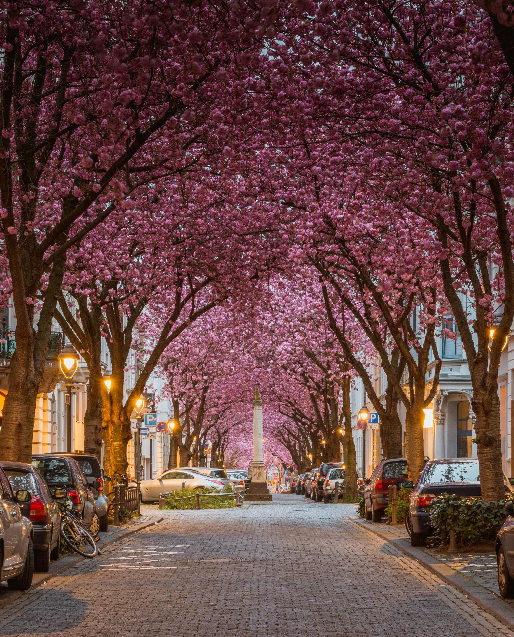 Bonn (Bόννη), Γερμανία