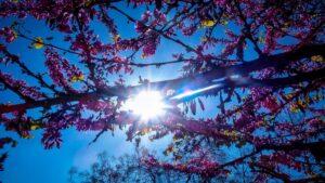 Καιρός 3/3: Καλοκαιρία & άνοδος της θερμοκρασίας μέχρι το Σάββατο – Έρχεται νέα επιδείνωση!