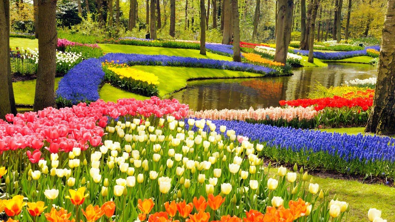 Κήπος Keukenhof, Lisse, Ολλανδία