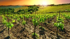 Οι 6+1 καλύτερες χώρες για οινοτουρισμό στην Ευρώπη! Στους δρόμους του κρασιού…