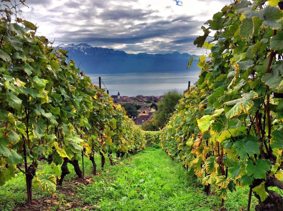 Ελβετία οινοτουρισμός