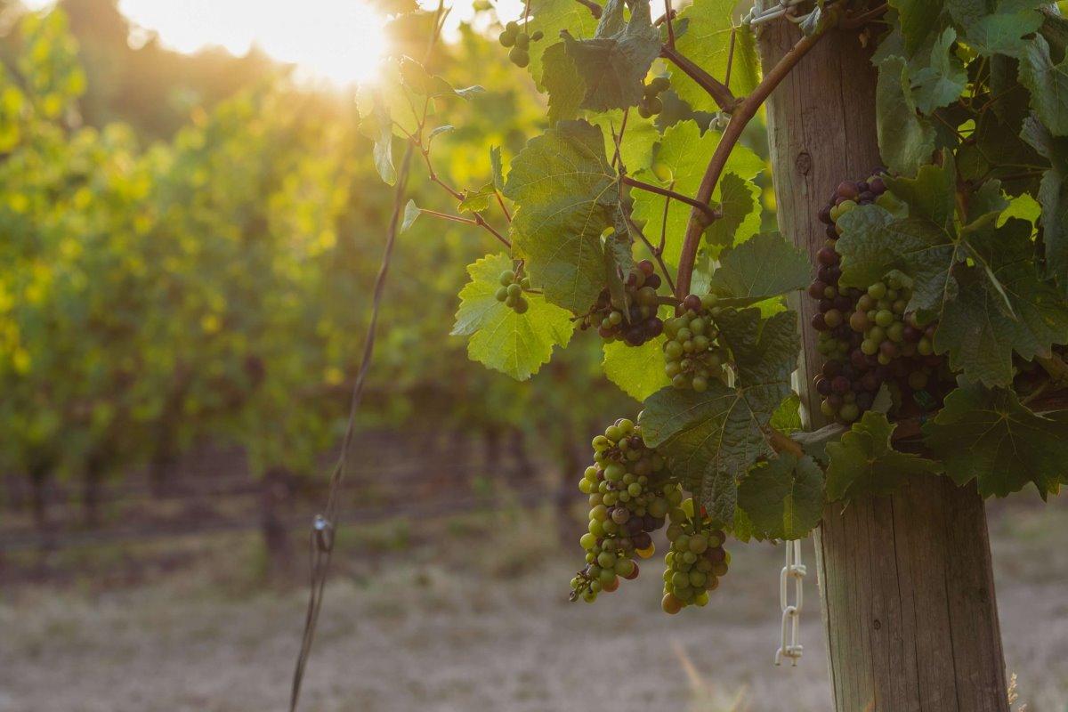 Πορτογαλία κρασιά