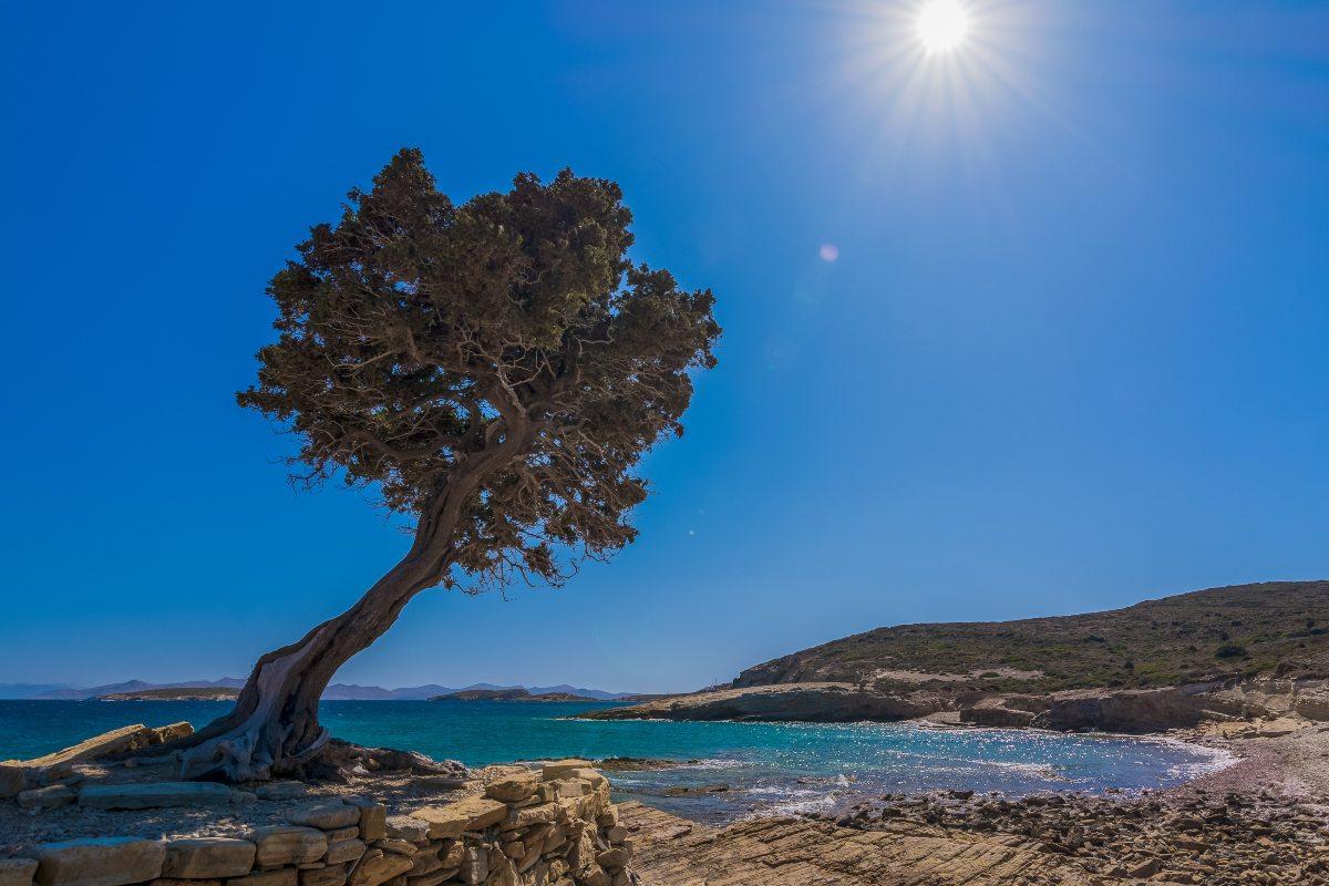 Λειψοί - δέντρο στην παραλία