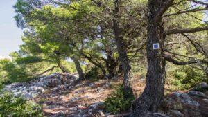 Τα 3 βουνά για mini αποδράσεις δίπλα στην Αθήνα – Σε τετ α τετ με τη φύση!