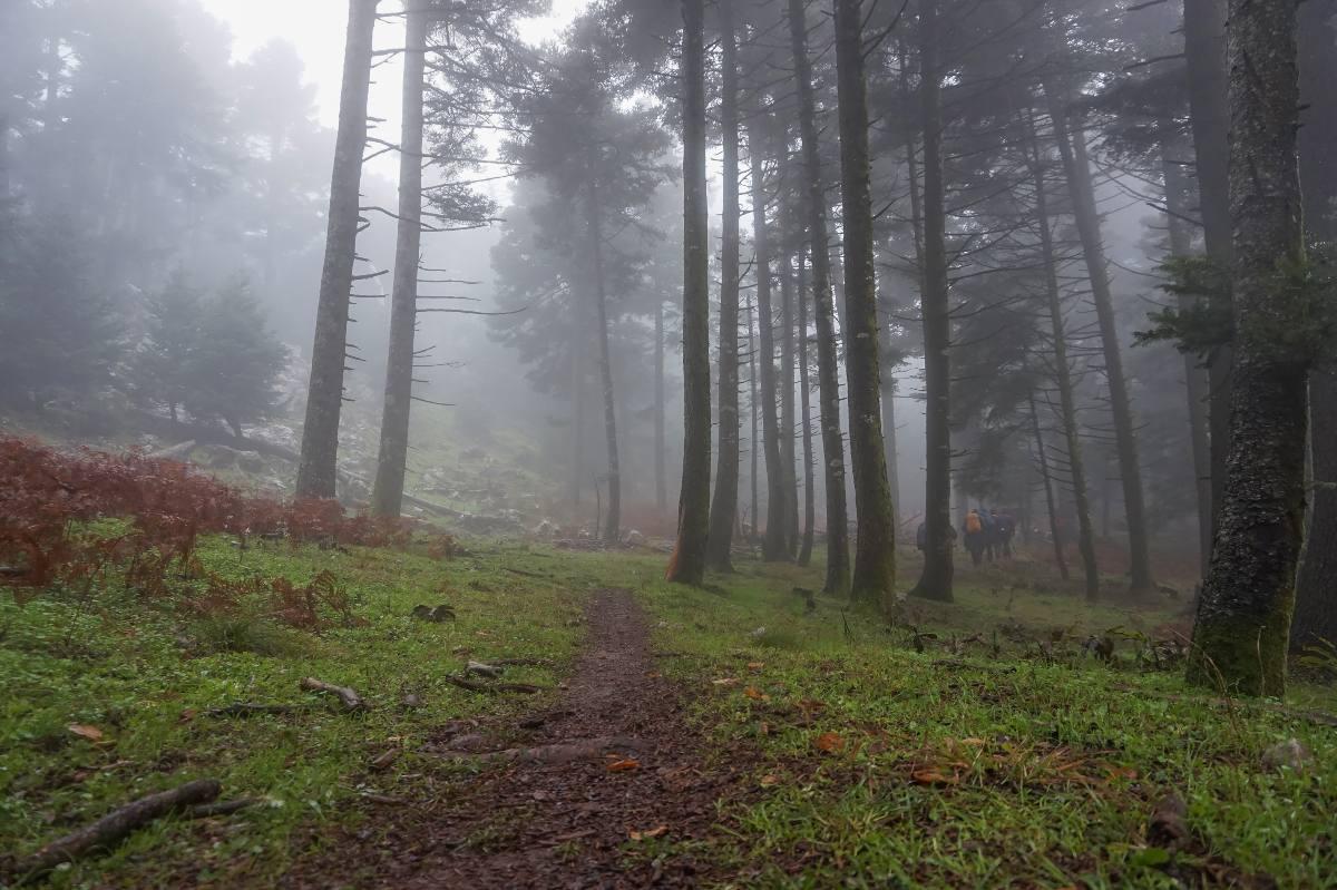 Στο δάσος του Δρυμώνα